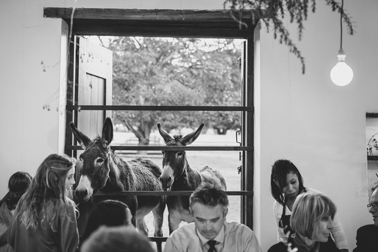 welovepictures_Babylonstoren Wedding_SM_107