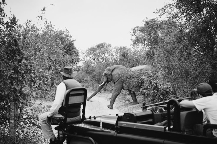 londolozi-wedding_welovepictures_055