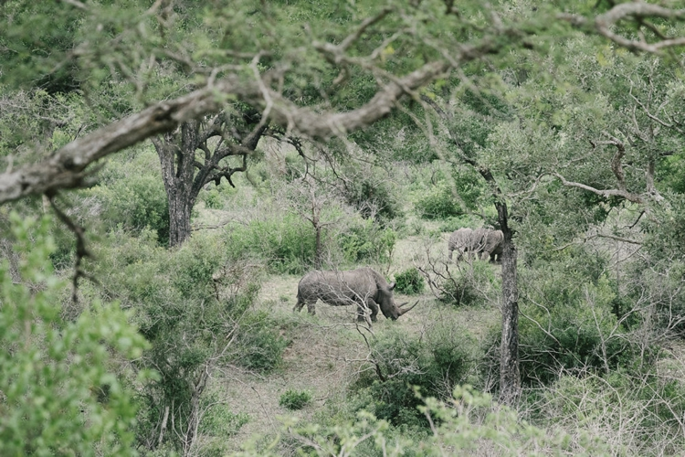 londolozi-wedding_welovepictures_057