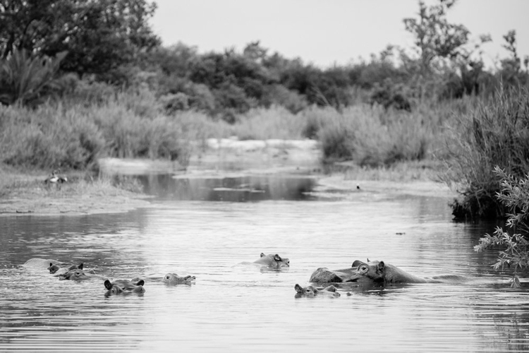 londolozi-wedding_welovepictures_058