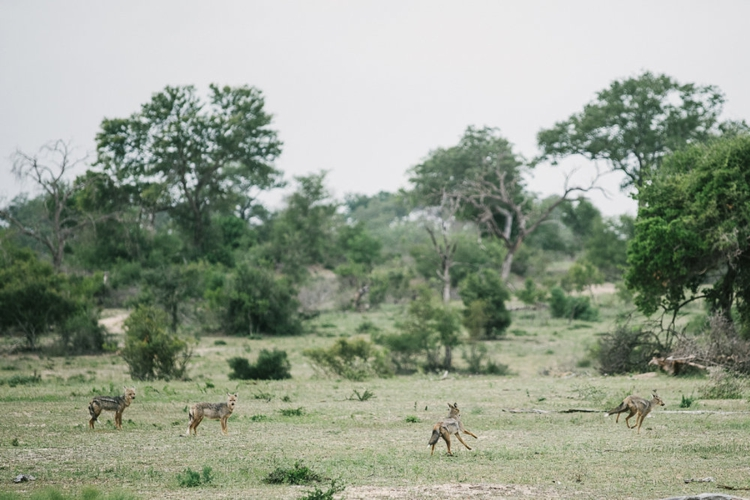 londolozi-wedding_welovepictures_059