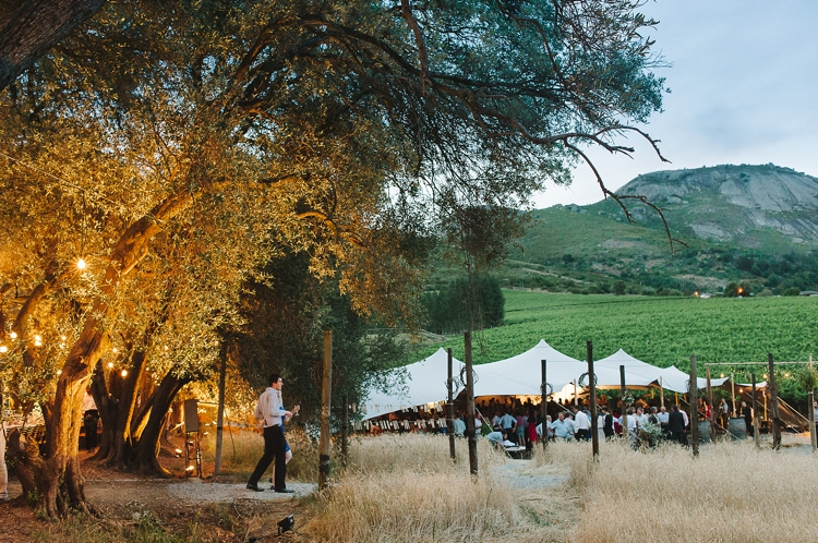 welovepictures_Olive Grove Wedding_104
